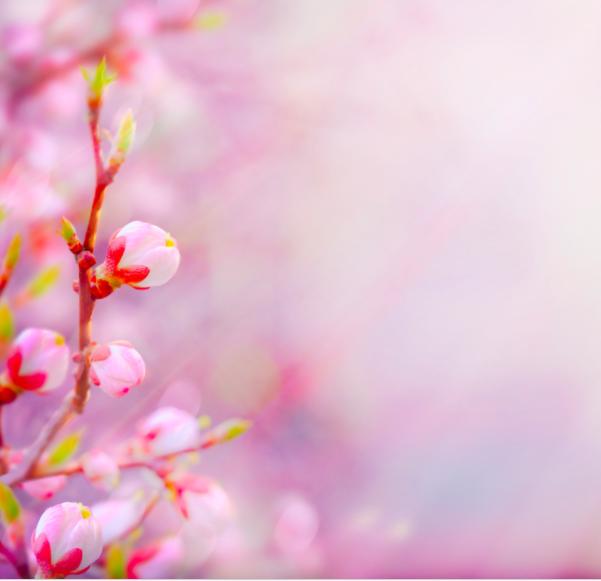 Punta en Primavera